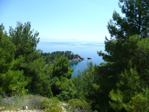 pine trees and blue sea